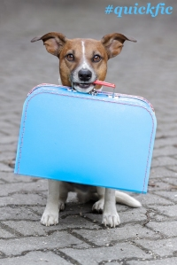 #quickfic Dog going on Holiday